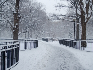 http://commons.wikimedia.org/wiki/File:Tompkins_Square_Park_snow_by_David_Shankbone.jpg